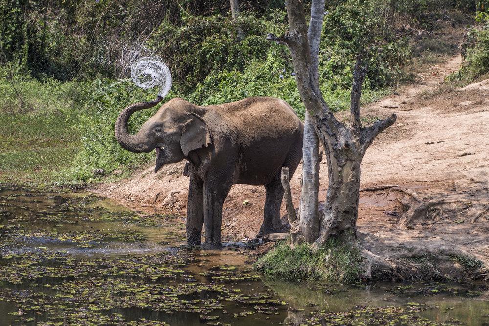 elephants (6).jpg