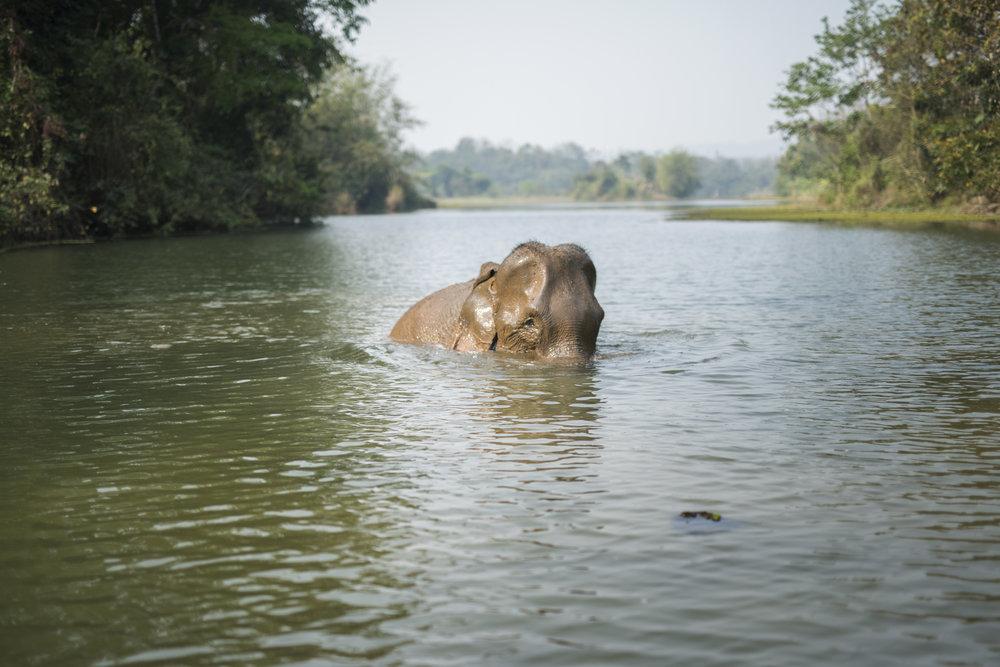 elephants (18).jpg