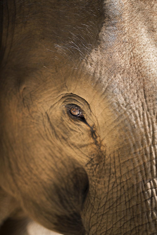 elephants (24).jpg