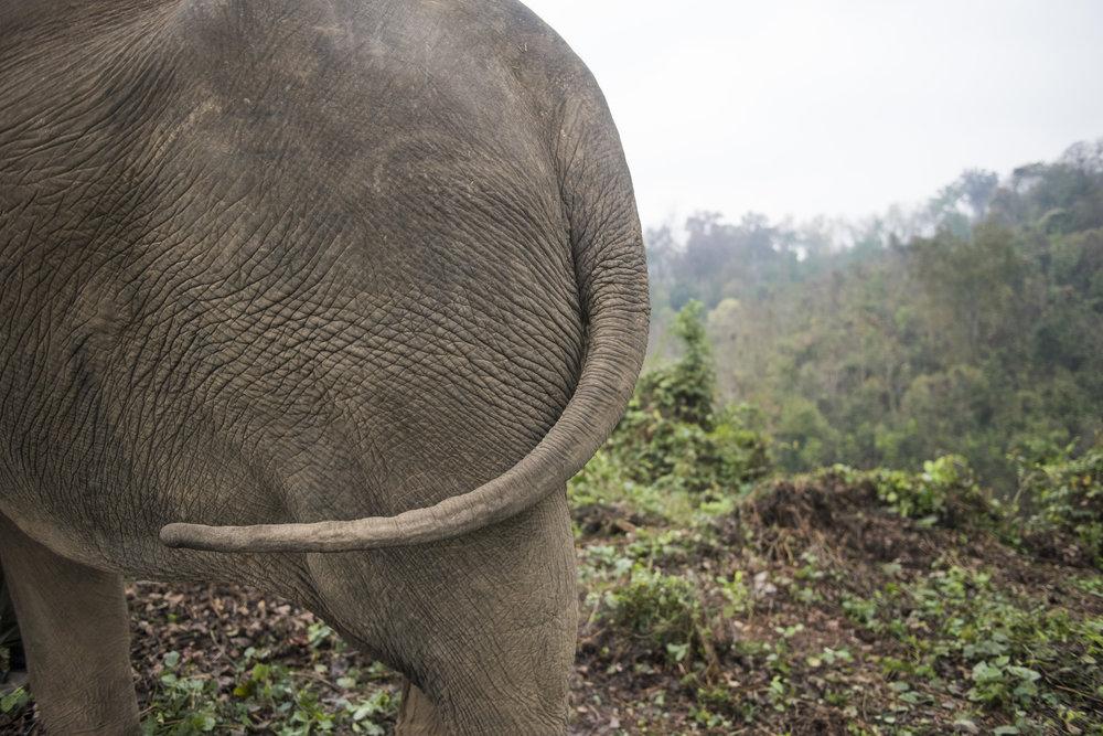 elephants (51).jpg