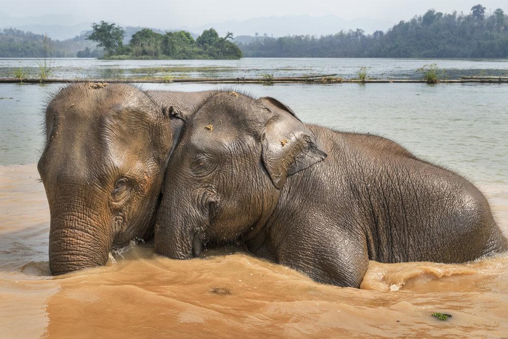 elephants (65).jpg