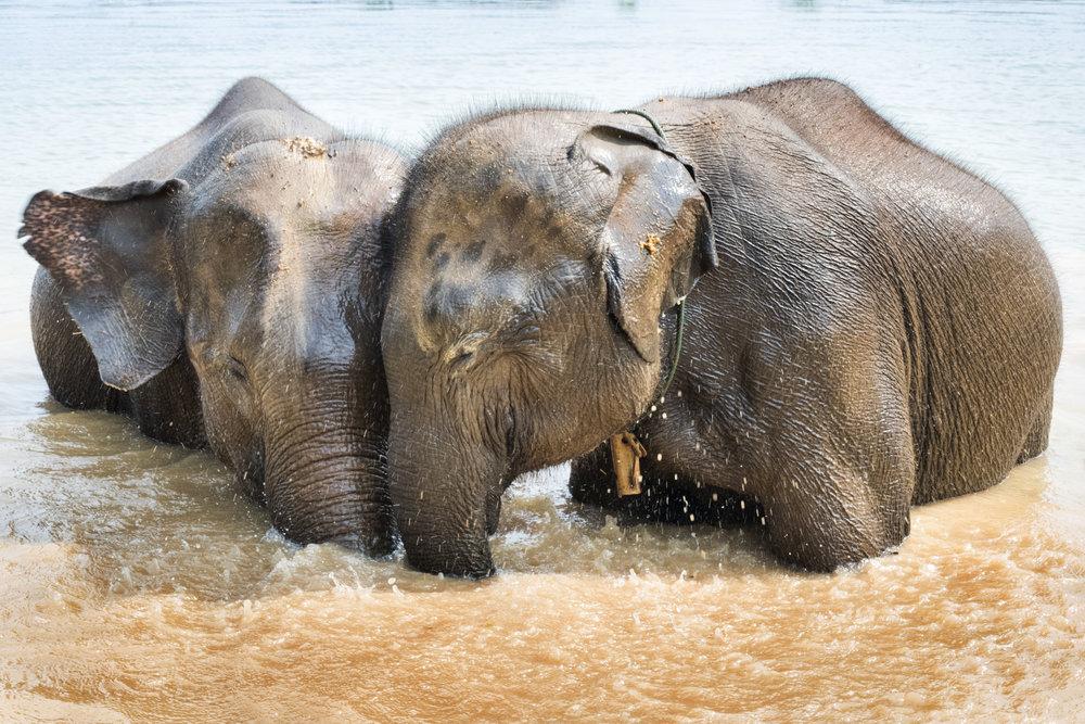 elephants (62).jpg