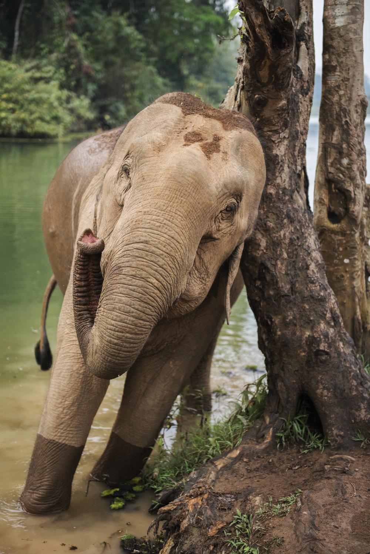 elephants (69).jpg