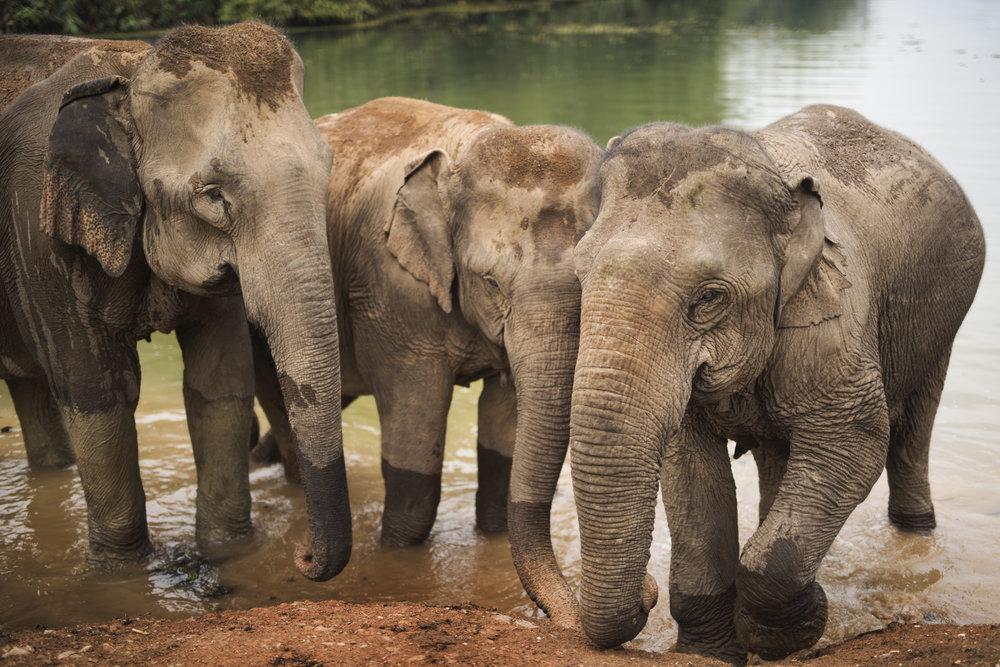 elephants (79).jpg
