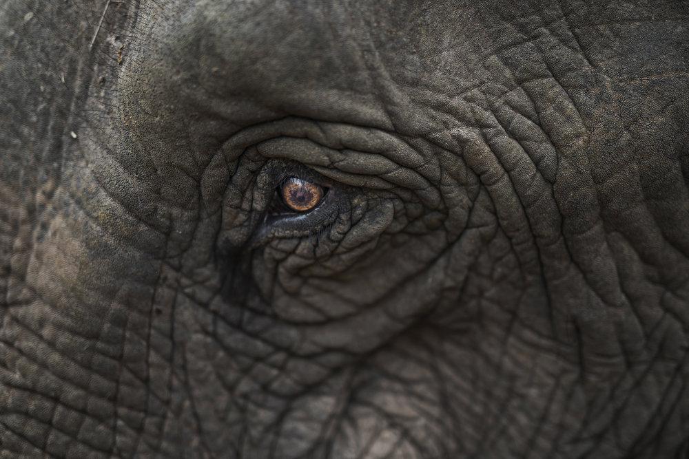 elephants (83).jpg