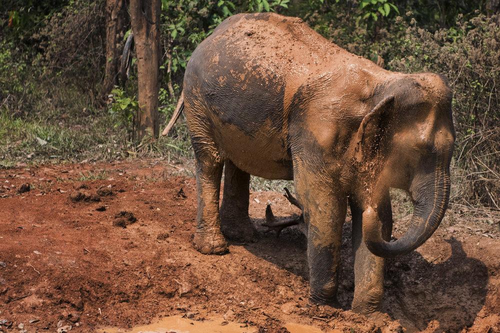 elephants (95).jpg