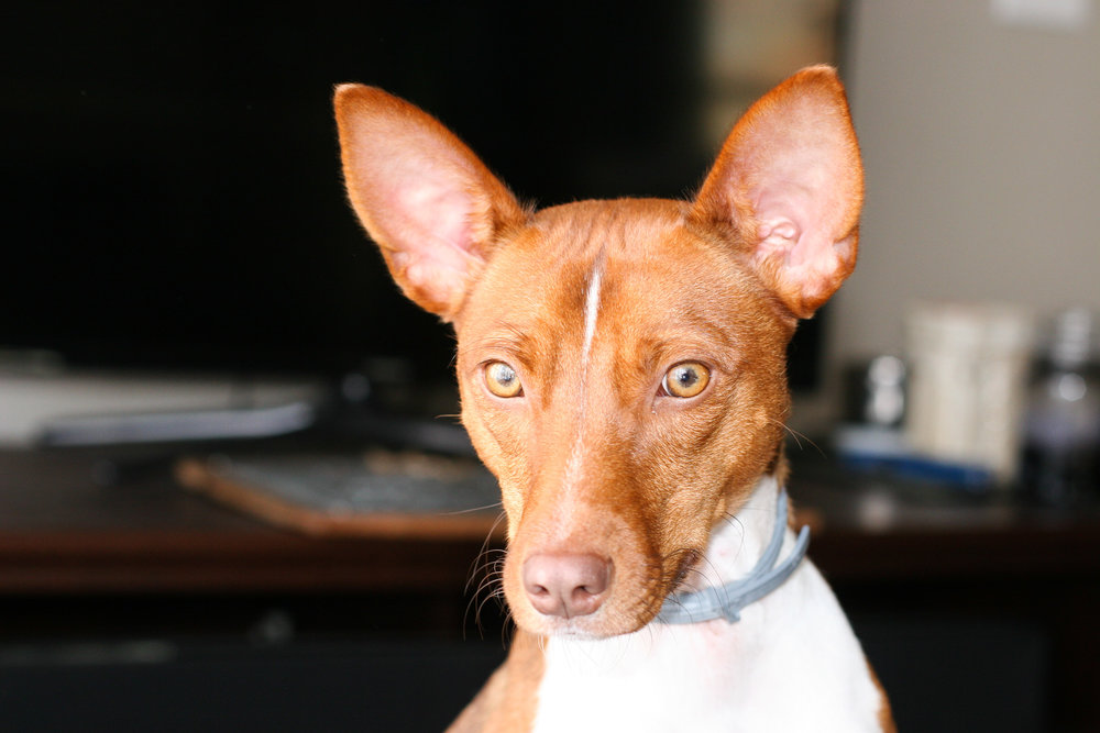 camera-settings-dog-photos-3.jpg