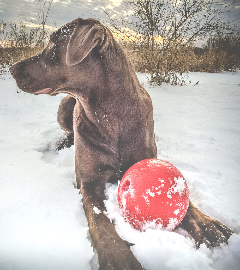 "Frank said I should call this one, ""Brown dog, Red ball"". He's so artsy."