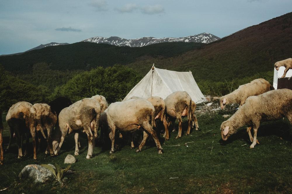 Real farm country in Kosova