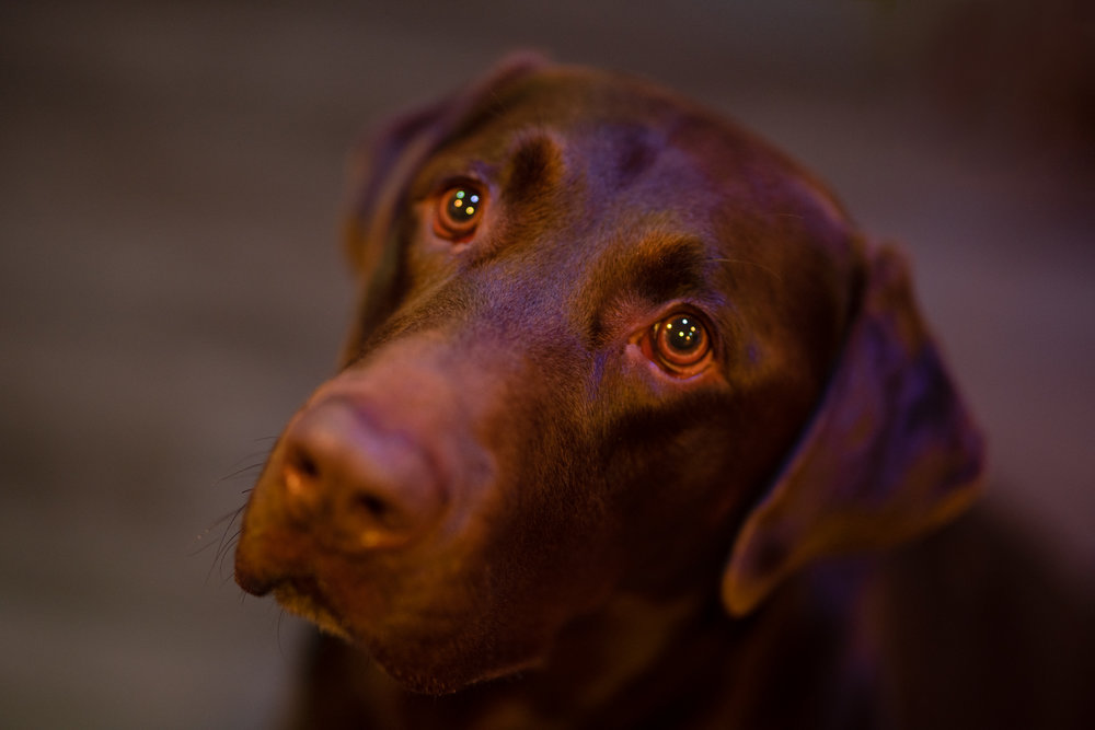 The shallow depth of field created in this shot is from a lens that has a very wide diameter.
