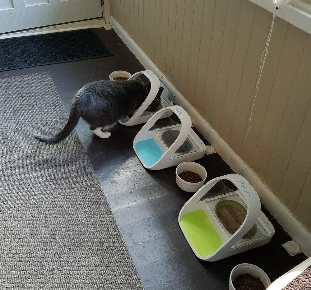 Sophie enjoying her medication spiked meal during a sitting visit