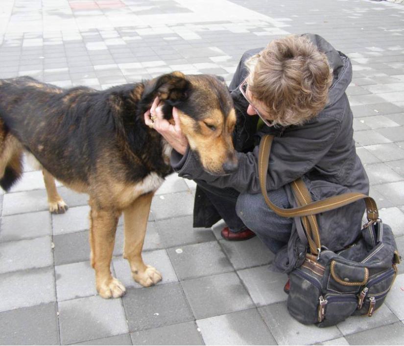 Balthazar - Han var en rigtig dejlig, stor og kærlig gadehund. Han blev fodret på gaden, som så mange andre hunde, men da han var en stor hund, var han også meget udsat for at blive fanget af hundefangerne. Alene hans størrelse gjorde, at folk var bange for ham, omend han var jordens venligste hund.