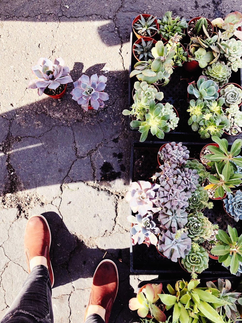 Some other favorite SD spots includeKobey's Swap Meet, where I love to wander the stalls forunique vintage pieces and $1 succulents. -