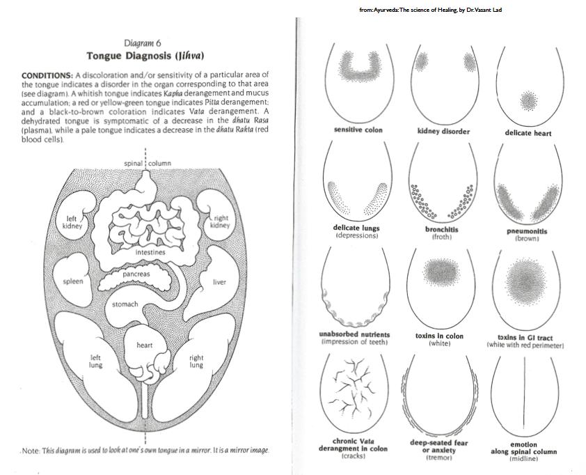 tongue map.png
