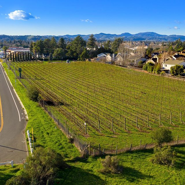 Just finished a luxury property shoot for  @jmburns10 Parcel. Approx 3.27 acres of Prime Real Estate right near the heart of Down Town Napa. Wonder piece of property! 4K featured video will be released shortly. 🍷🍇🏡