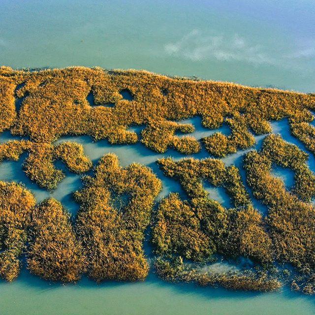 Beautiful Bay Area marshlands!