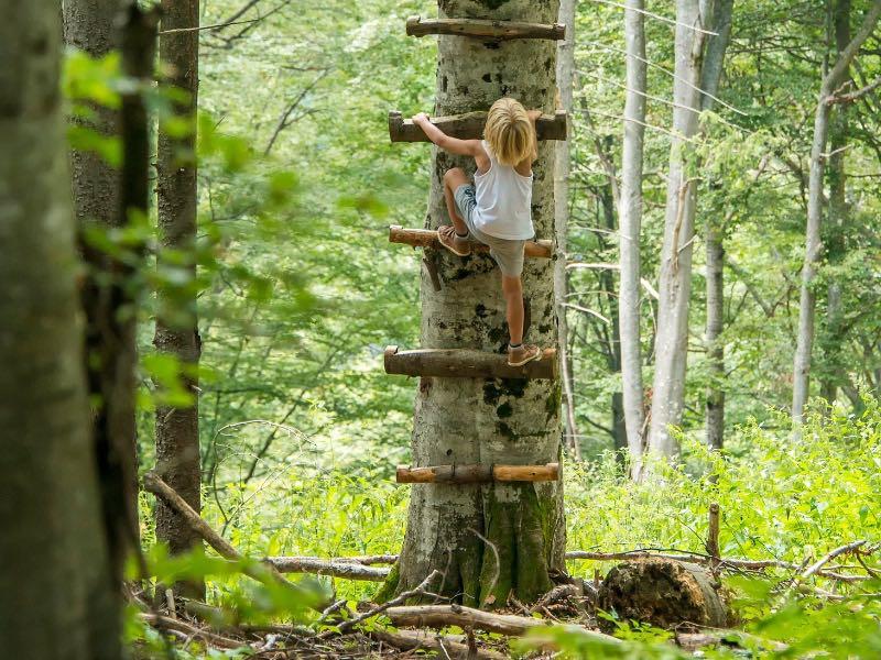 child-climbing-tree.jpg
