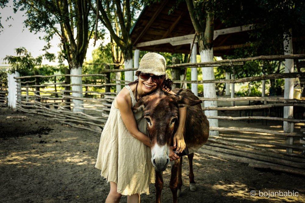 chiharu donkey.jpg