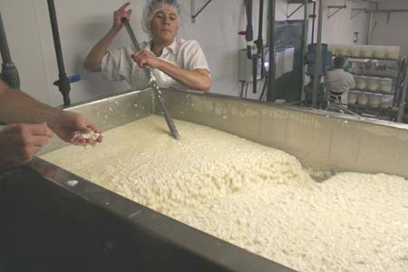 Stirring to help separate the whey (liquids) from the curds (solid proteins).