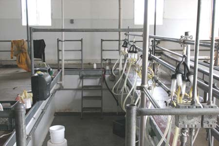 The milking barn- After the magic happens in the fields, this is where the cheese starts.