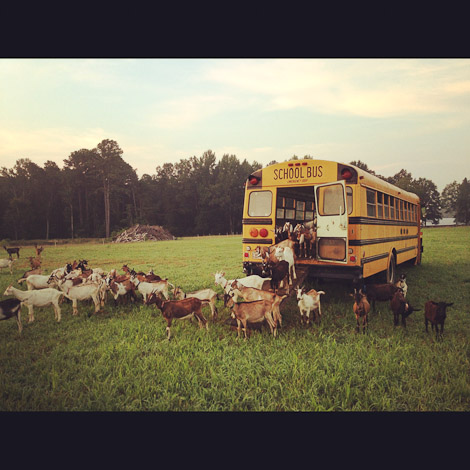 Prodigal Farms, North Carolina