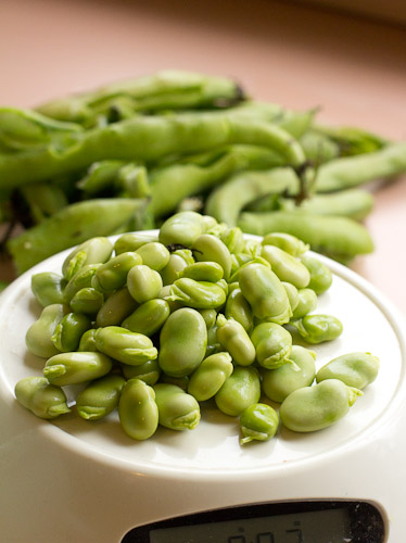 Fava Blanching (1 of 1)