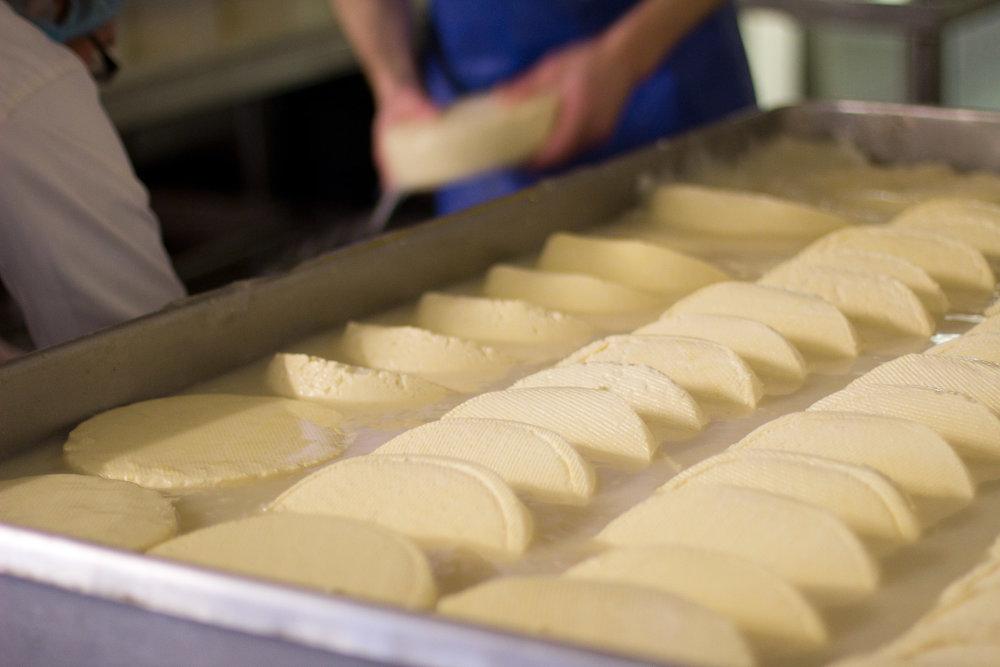 Cheese brining in salt water, Cork, Ireland