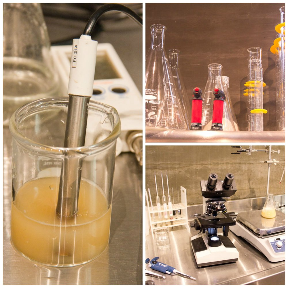 Testing bacteria and yeast activity at Fort Point (like all the time)