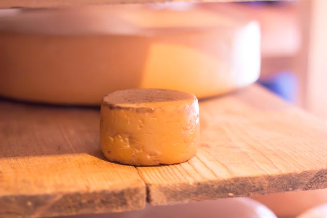 Dingle-Tiny-Cheese-1-of-1.jpg