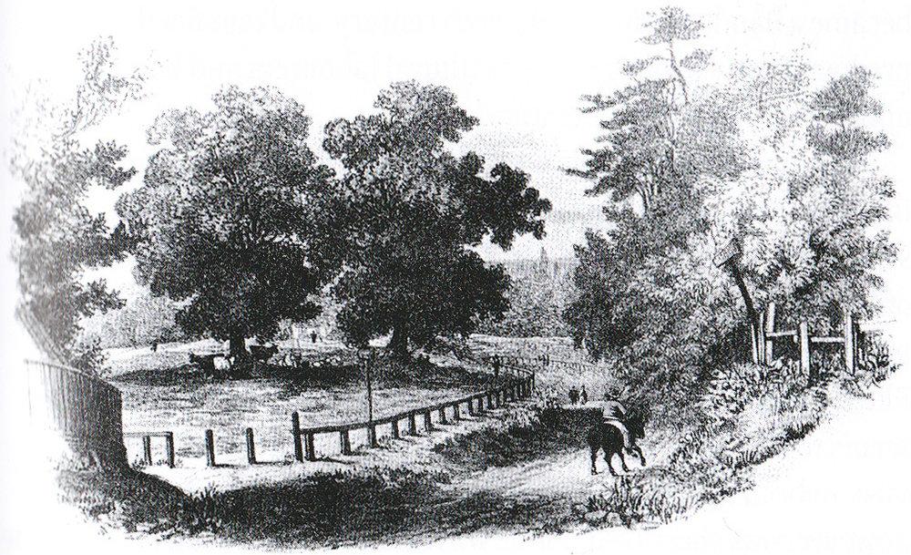 1792 North End Way, Gibbet Trees.jpg