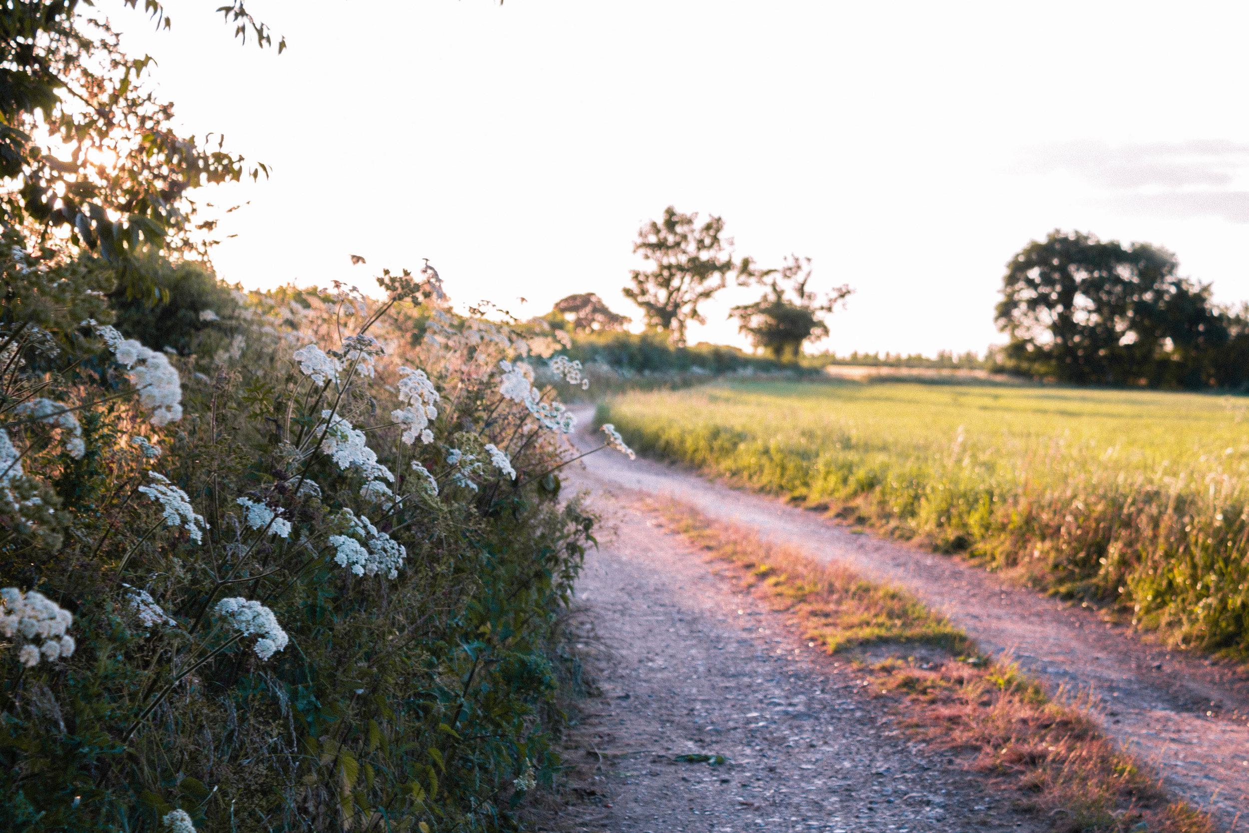 Summer Solstice, Farm Walk