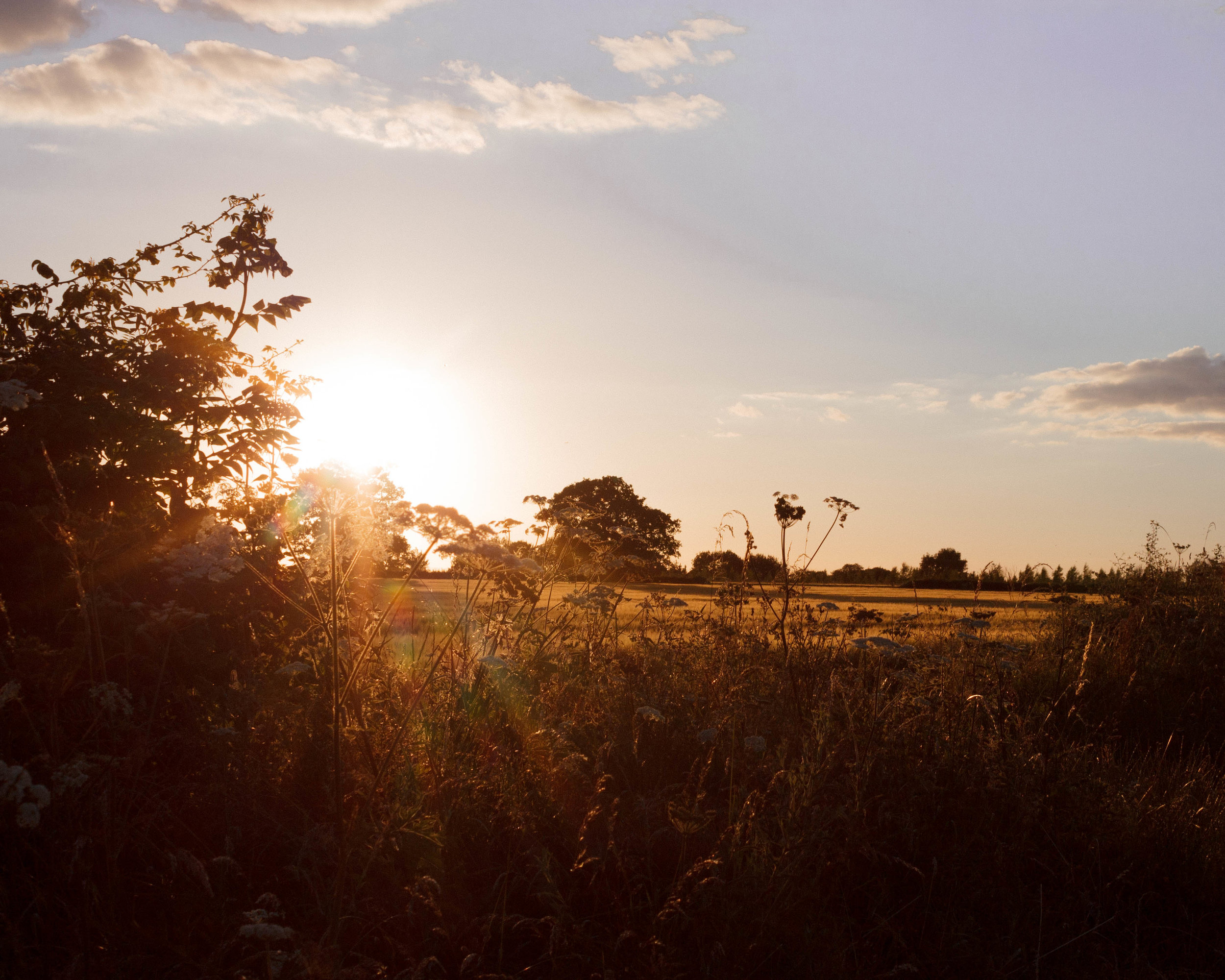Sunset, field hedgerow