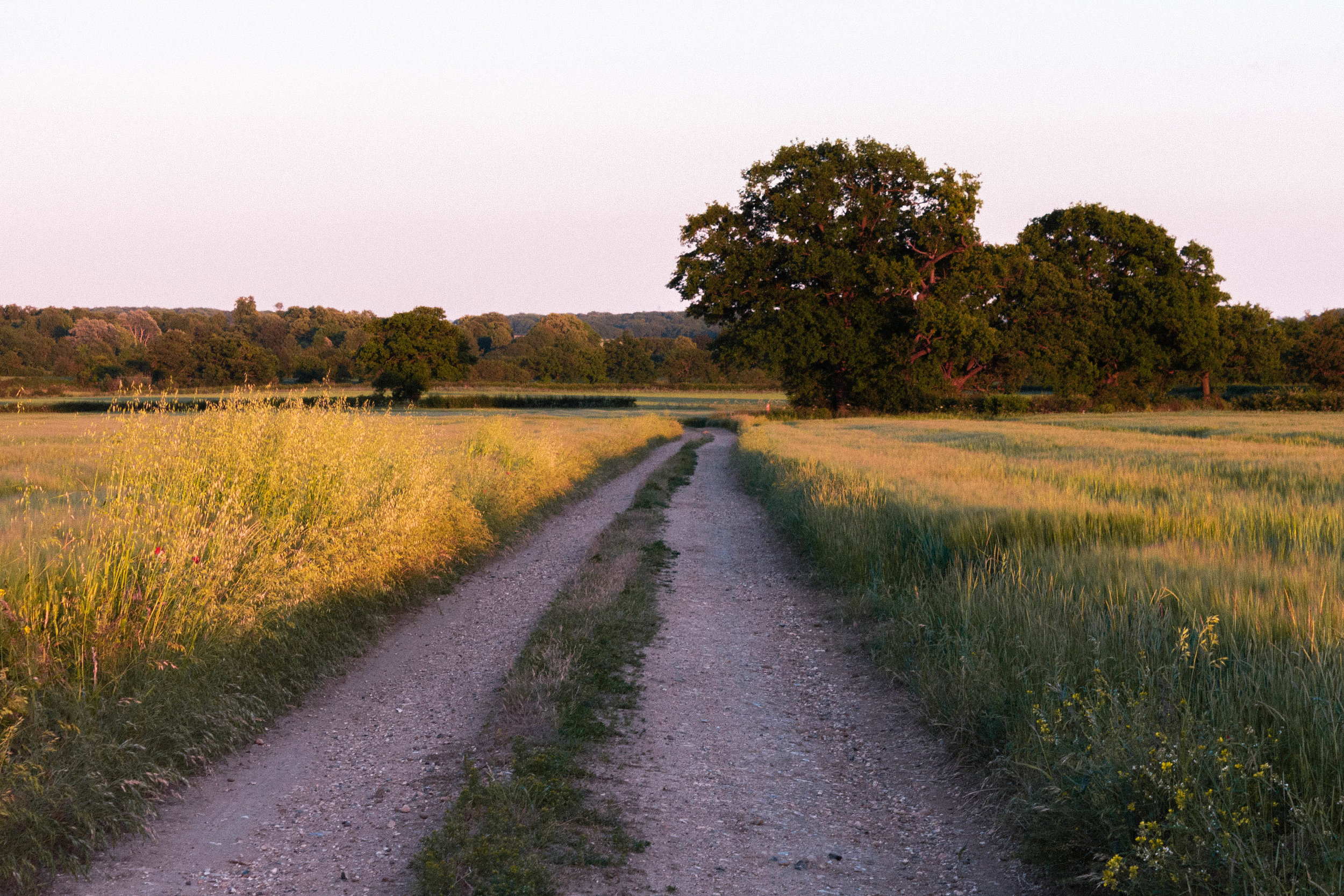 Dirt track, summer walk, field, dusk