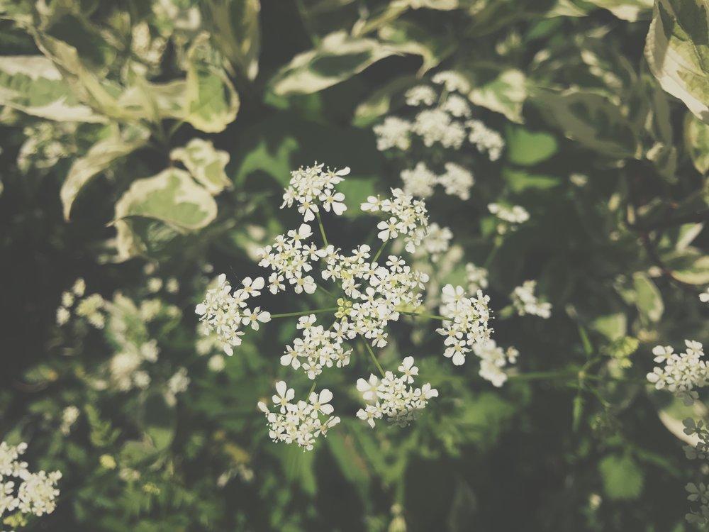 IMG_0103.jpg