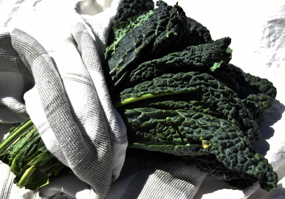 lacinato kale - better known as dinosaur kale