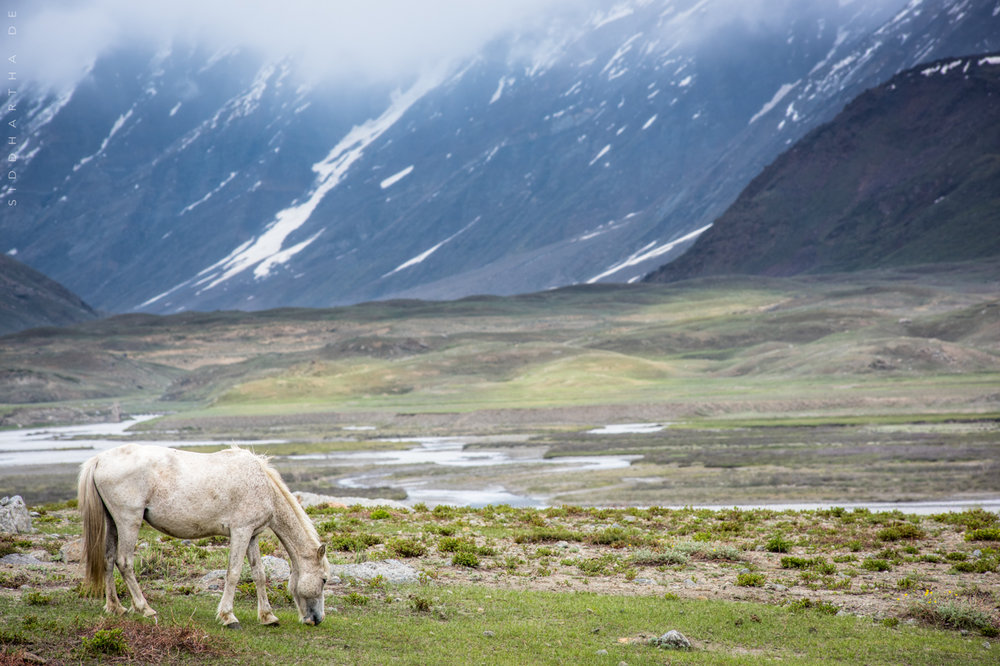 Ladakh 09.jpg