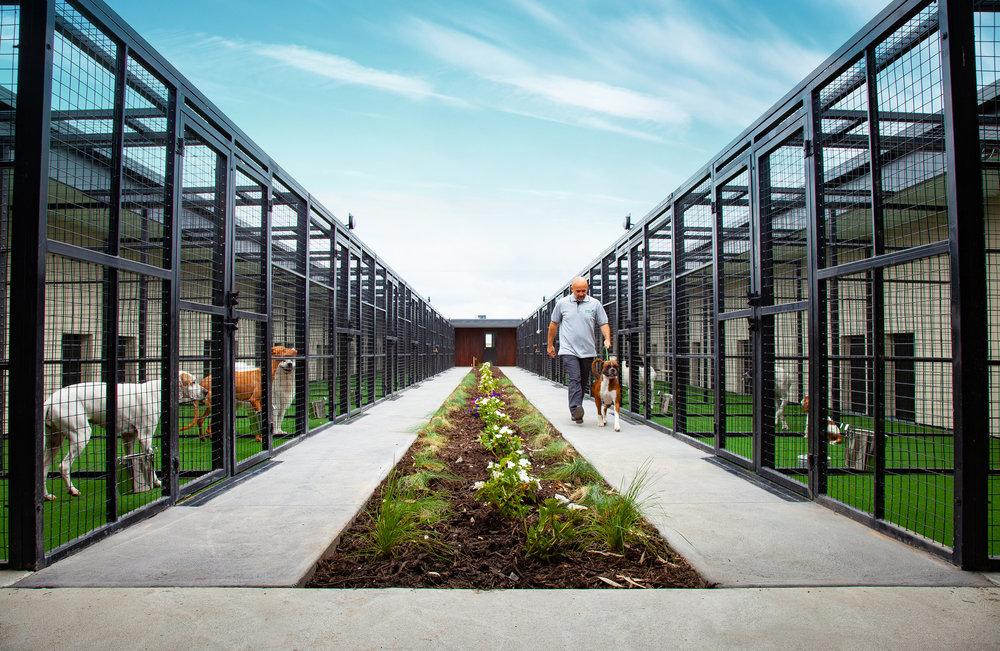 Green Meadows Pet Resort Yard
