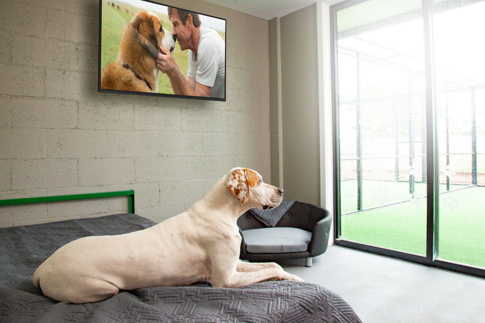 Deluxe Dog Kennels - - Spacious, well-appointed room- Single bed or couch- Wall Mounted High Definition Television- Temperature controlled environment- Sliding glass door to covered play area- Comfortable furniture- Hygienic epoxy resin floors & walls