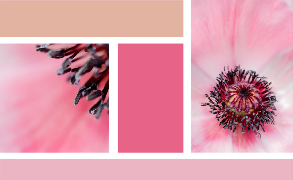 The unusual combination of delicate painterly pinks shimmers around a stark, spiked structure. The contrast makes a striking accompaniment to the directional earthy neutrals that continue to grace the latest interior trends. - MaterialsPrinted On Fujiflex Super Gloss Archival Paper and supplied in a white, hand painted wooden frame with anti-reflective glass as standard.Now taking pre-orders. Please contact me to secure a limited-edition artwork.