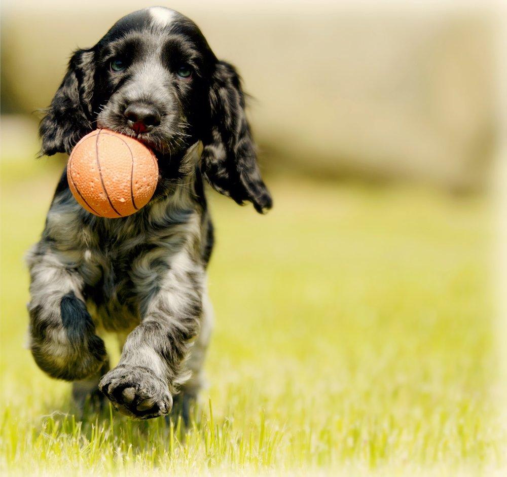 puppy-training.jpg