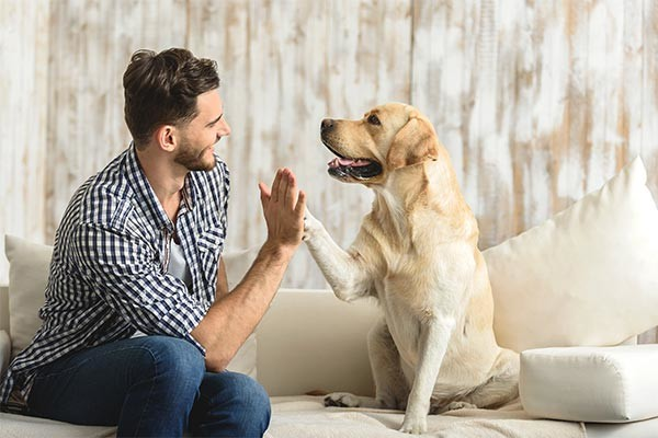 Get in touch - Ready to take the next step? We offer several solutions to help you achieve your goals: dog training, behaviour training etc.