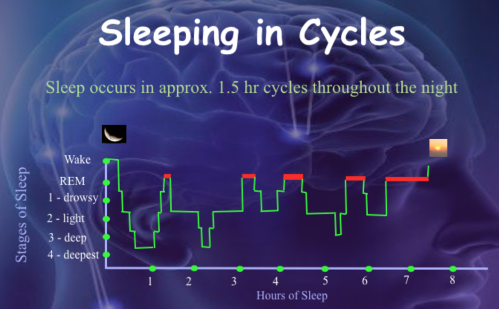 (SOURCE: Sleep Science Consulting)