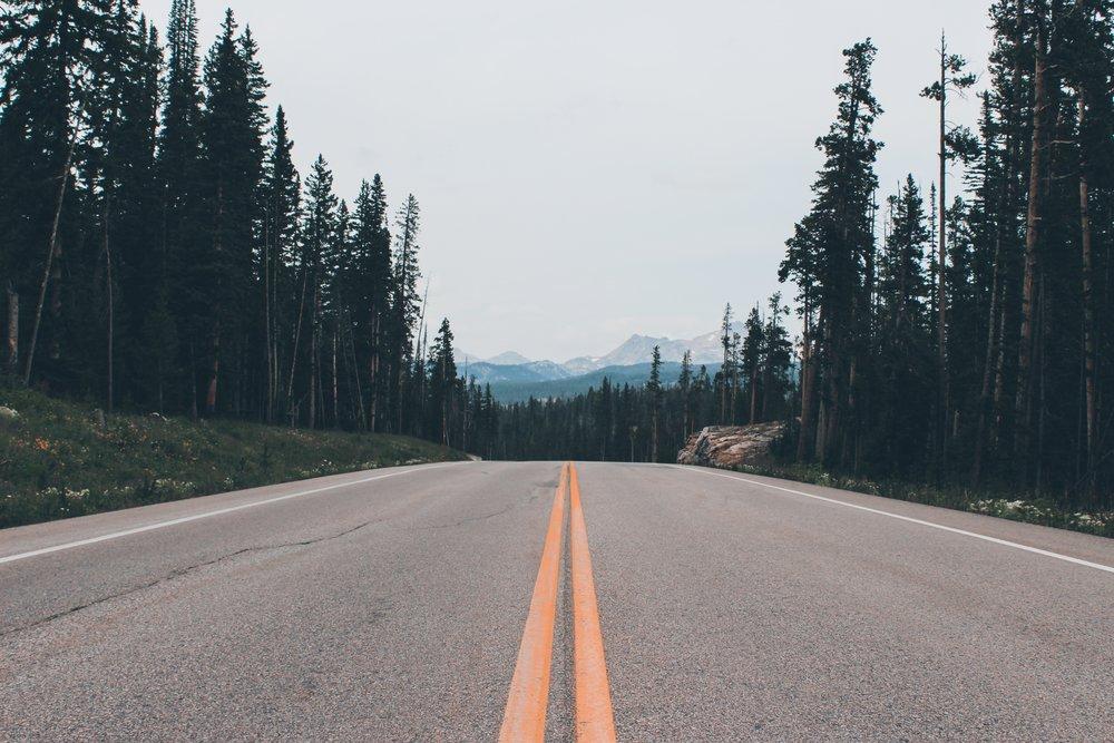 asphalt-conifer-daylight-1532477.jpg