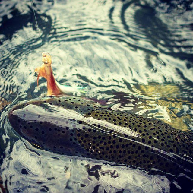2018 hosted Alaska trip in the books. Good fishing. Great people. New friends. I'm stoked to be a part of it!  @finandfire @alaskatroutfitters #alaskaflyfishing #rainbowtrout #halibutfishing #alaskasteelhead #simmsflyfishing #yeticoolers #kenairiver #anchorriverak
