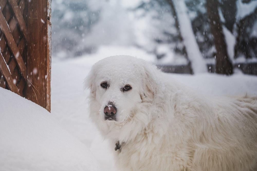 juno-snow-mar-2019-26.jpg