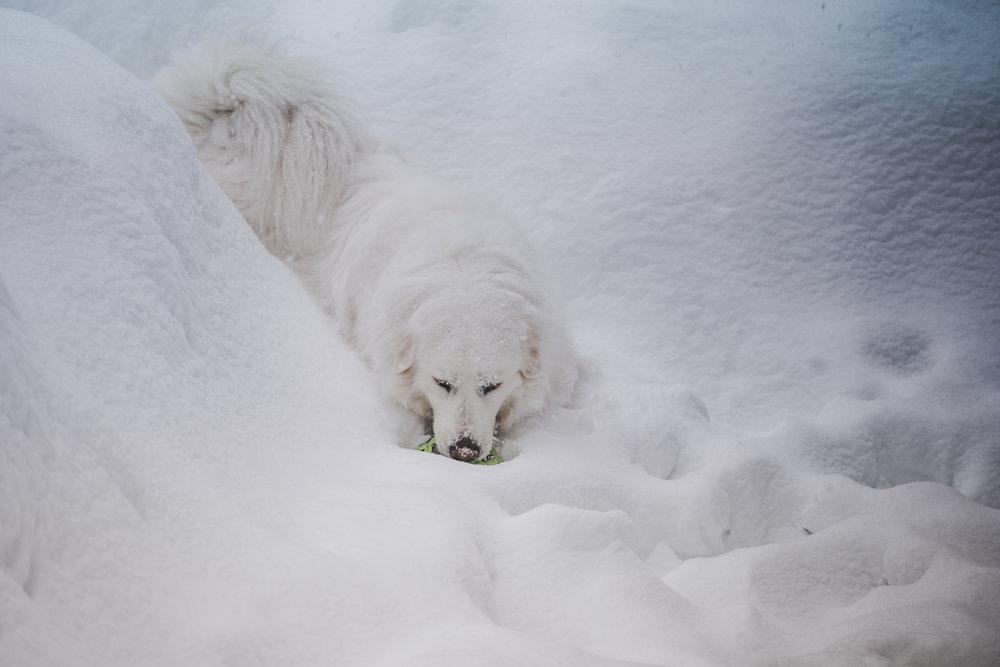 juno-snow-mar-2019-36.jpg