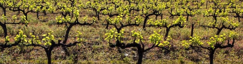spring-grape-vines-cropped.jpg