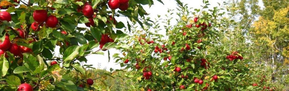 orchards.jpg