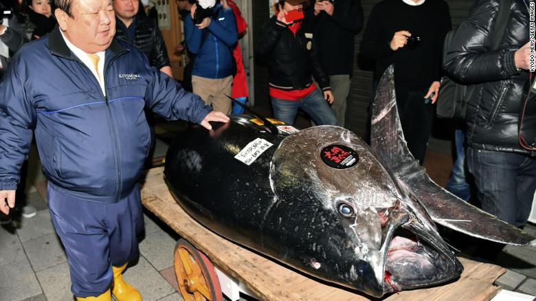 $3.1 Million Dollar Bluefin Tuna