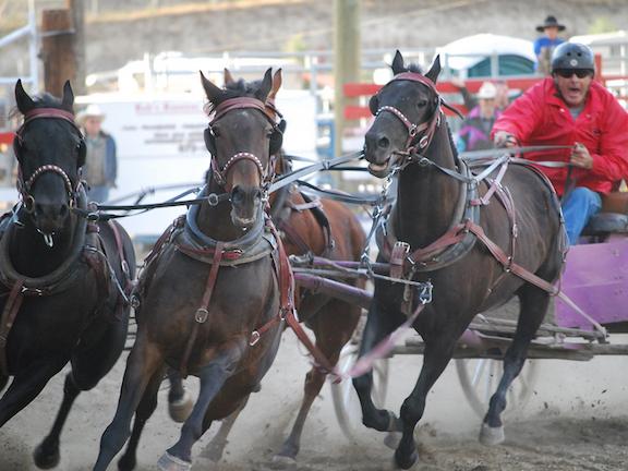 horsesmedley